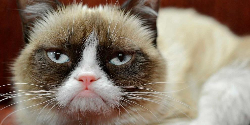 Imagem de Grumpy Cat, a gata mal-humorada da internet, vai estrelar especial de Natal no site TecMundo