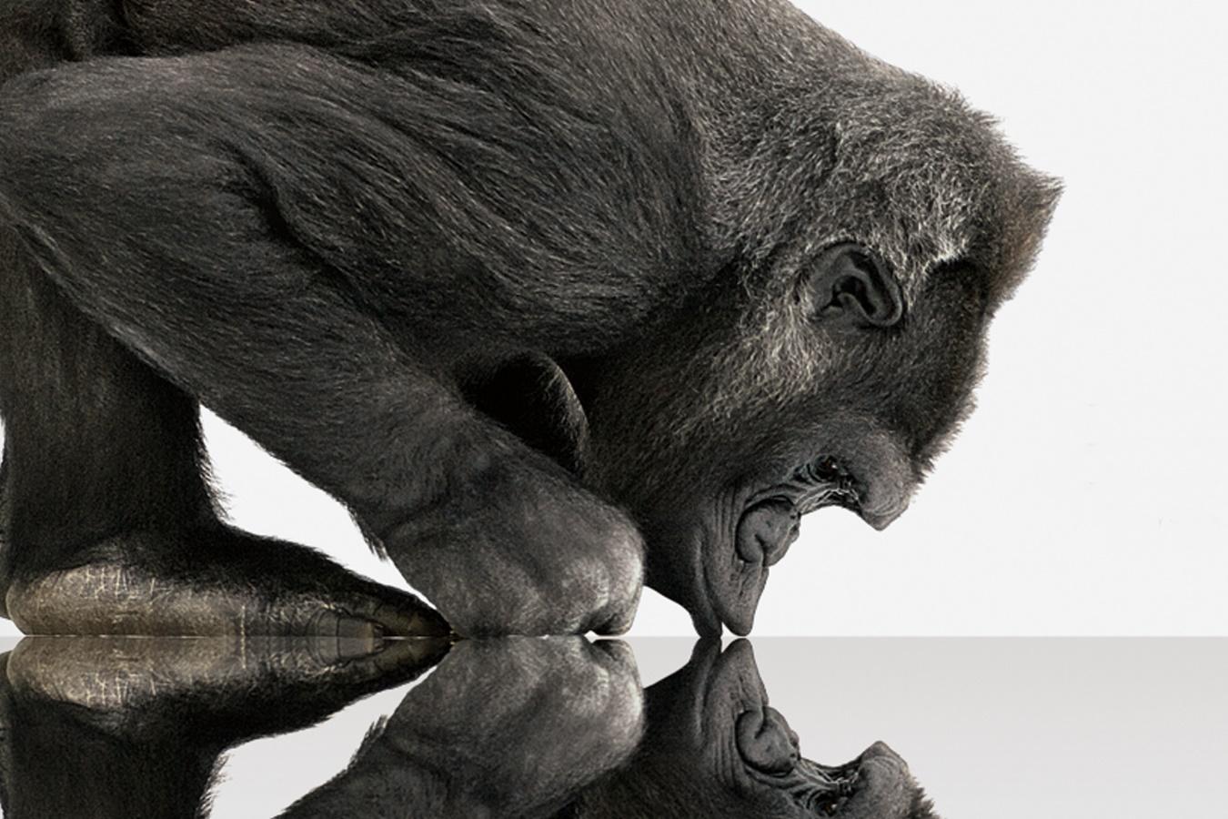 Imagem de Corning lança Gorilla Glass 5, quatro vezes mais forte que concorrentes no tecmundo