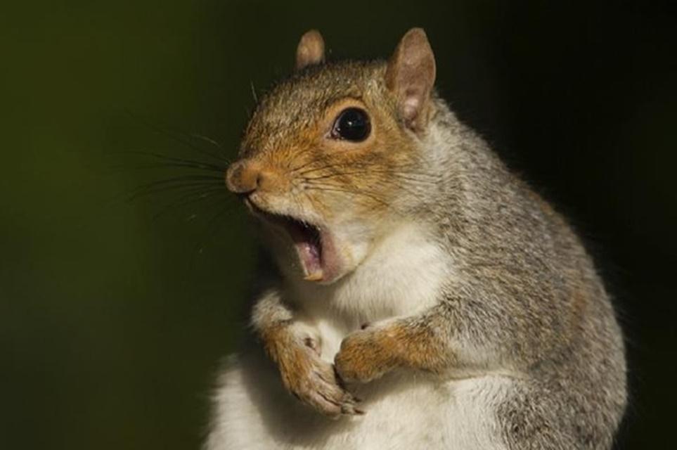 Imagem de Mundo animal: esquilo 'rouba' GoPro e grava fuga que lembra cena de jogo no tecmundo