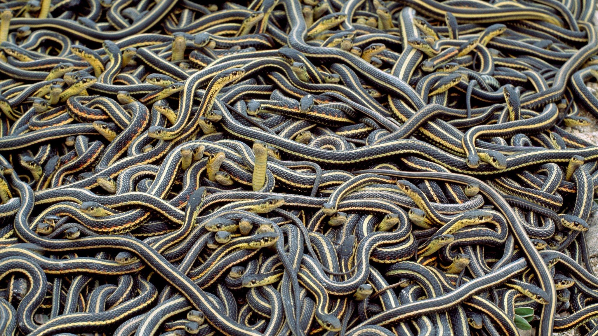 Imagem de Pesadelo: torre celular de 38 metros é invadida por cobras no tecmundo