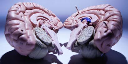 Imagem de 5 mitos sobre o cérebro que você jurava ser verdade no site TecMundo
