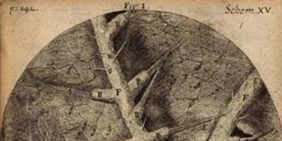 Imagem de Livro do século 17 mostra como é o mundo microscópico no site TecMundo