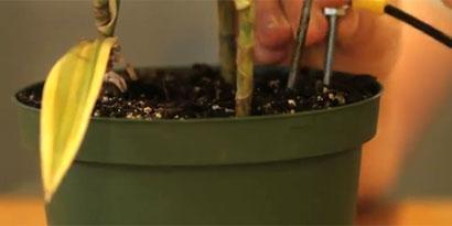Imagem de Rapaz cria dispositivo que rega plantas automaticamente [vídeo] no site TecMundo