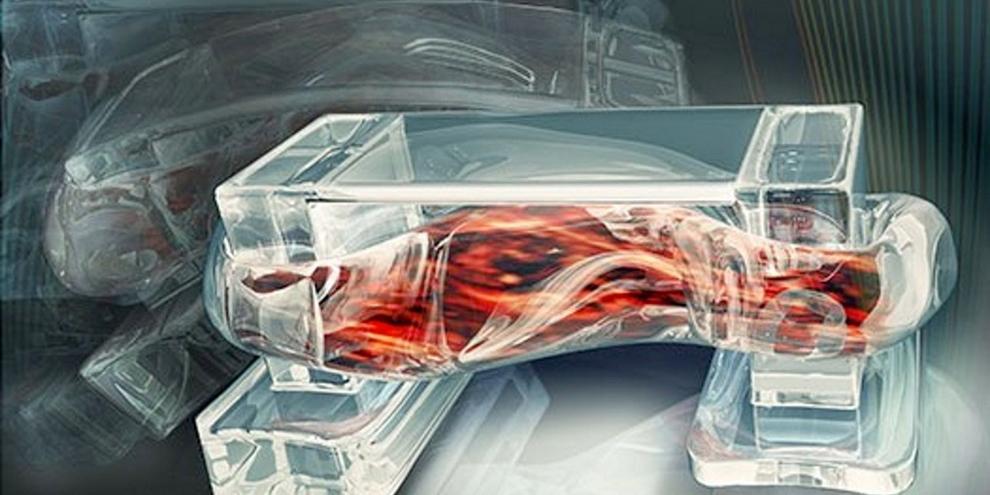 Imagem de Biorrobô utiliza células musculares para se movimentar no site TecMundo