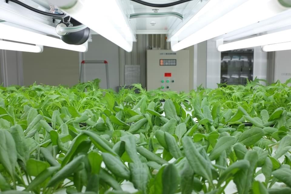 Imagem de Toshiba inicia produção de verduras que não precisam ser lavadas no site TecMundo