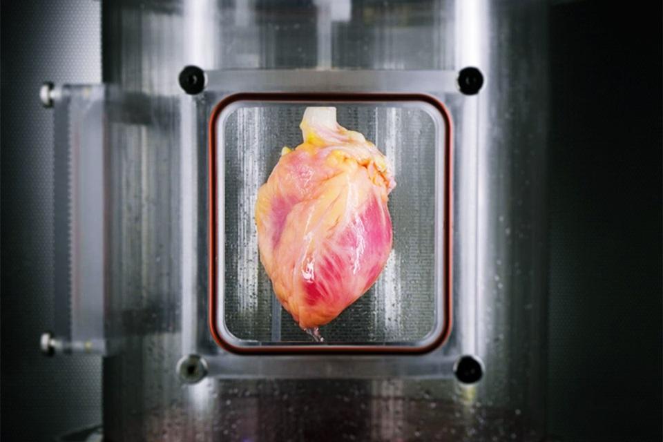 Imagem de Fim dos transplantes? Células da pele são usadas para criar tecido cardíaco no tecmundo