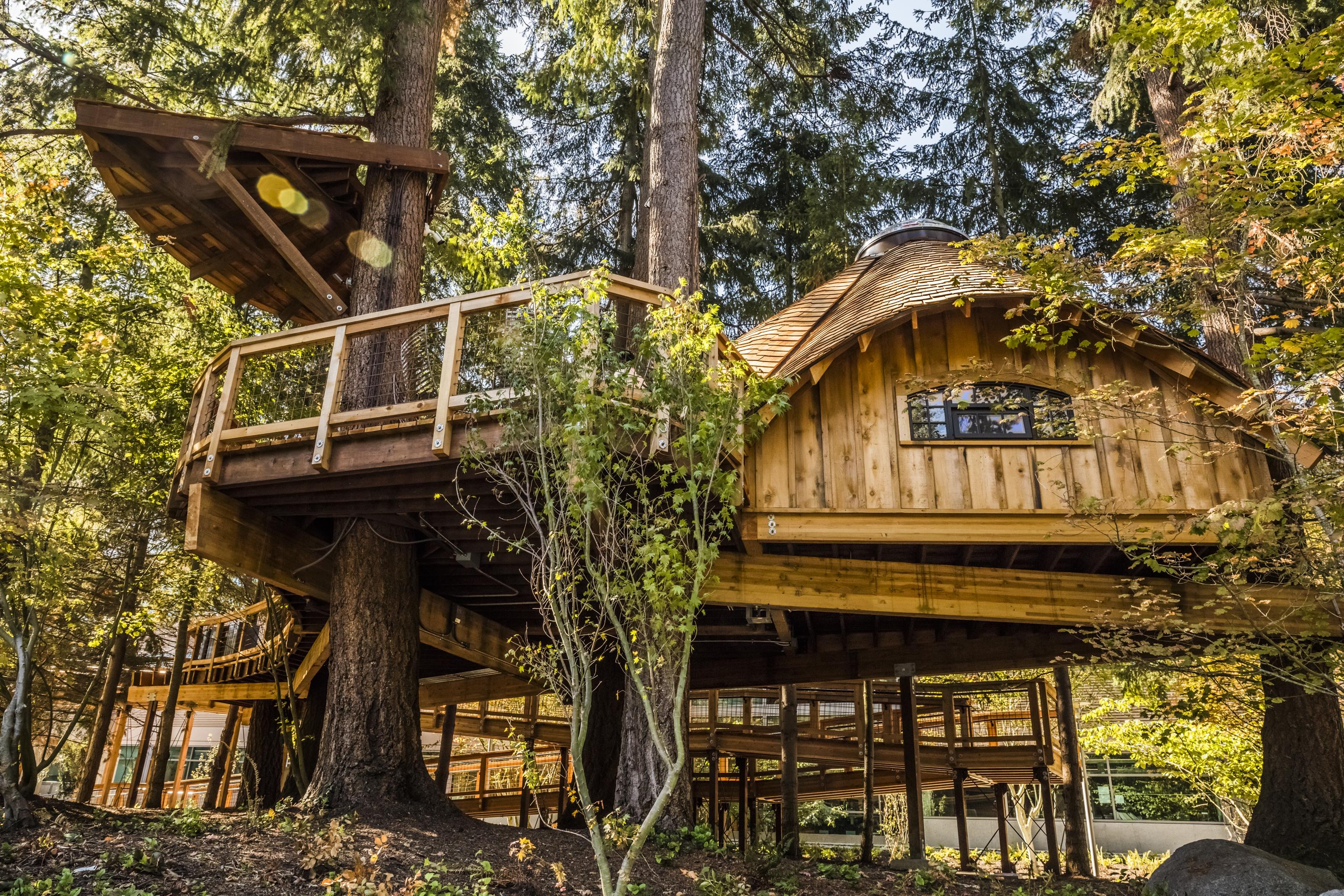 Imagem de Microsoft constrói complexo de 'casas na árvore' para seus funcionários no tecmundo