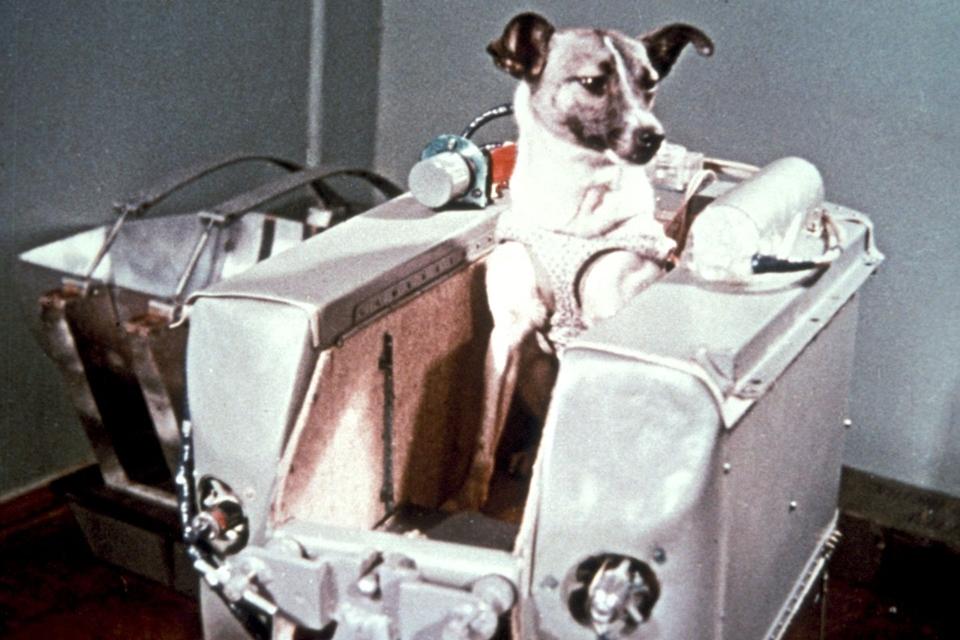 Imagem de Há 60 anos, a cachorra Laika morria sozinha em busca dos segredos do espaço no tecmundo