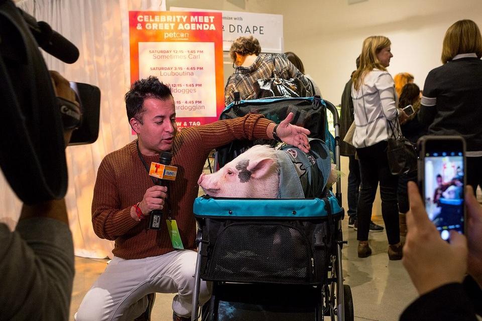 Imagem de Inclusão digital? PetCon reúne web celebridades caninas e felinas nos EUA no tecmundo