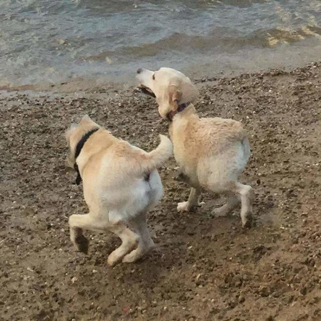 cãozinho ir à beira da praia