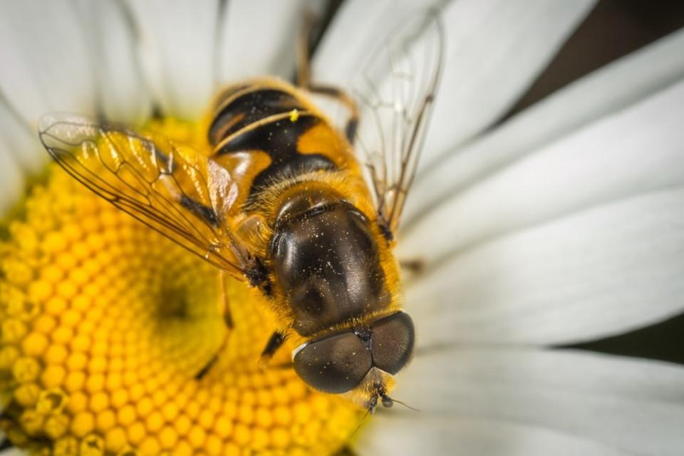 Imagem de Plano da NASA para explorar Marte envolve abelhas-robô no tecmundo