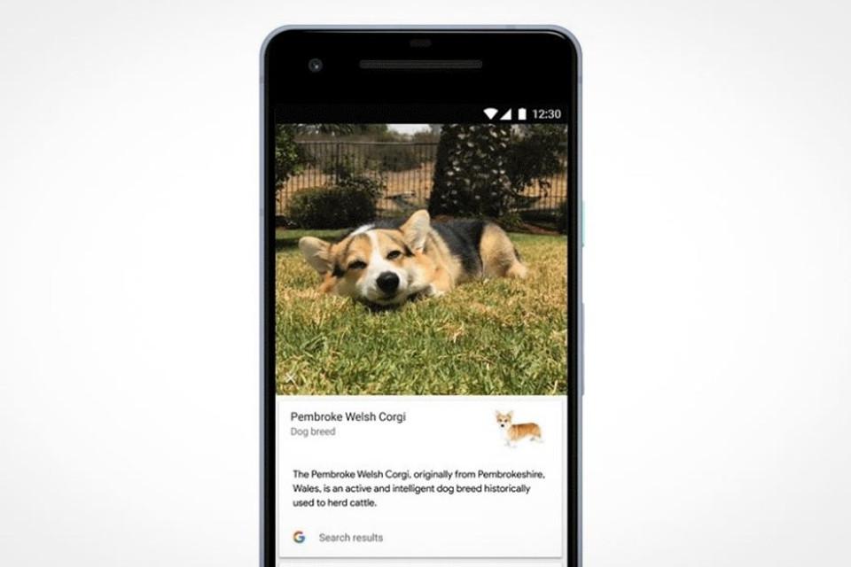 Imagem de Google Lens agora diferencia raças de cães e gatos nas suas fotos no tecmundo