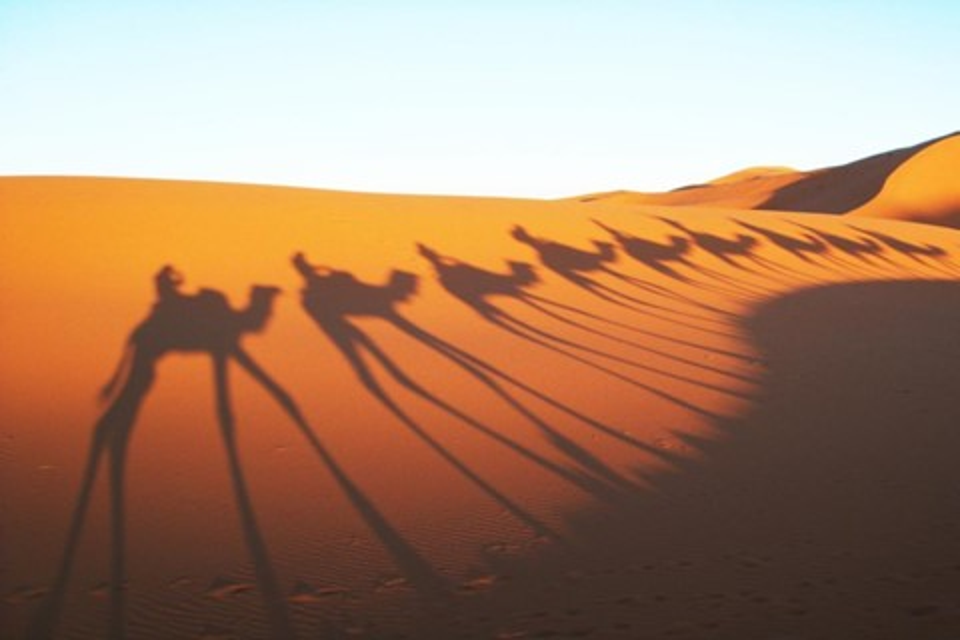 Imagem de Cientistas afirmam ser possível reflorestar parte do Saara no tecmundo