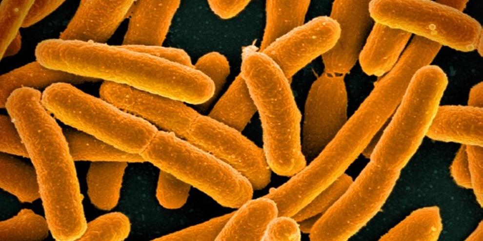 Cientistas substituem DNA de bactéria e criam vida sintética