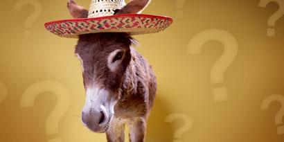 Imagem de Erro 404: Descubra se você é burro [quiz] no site TecMundo